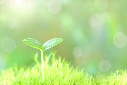 光を浴びる新芽